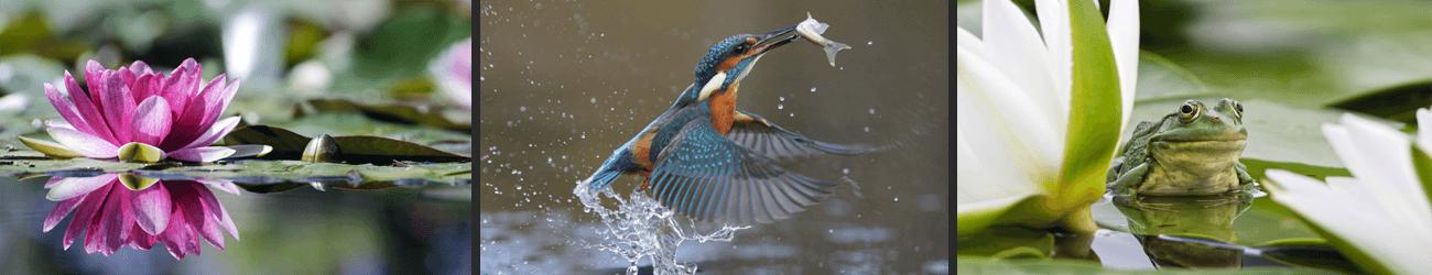 Bilder Wassertiere